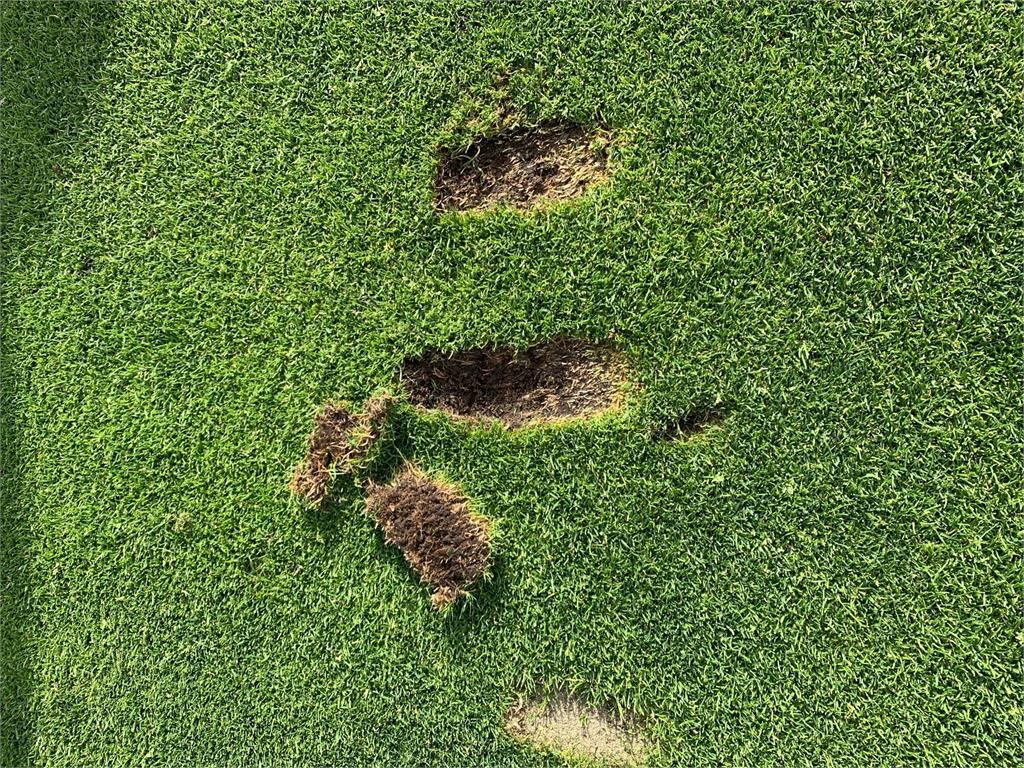 Divot Close Up 2.jpg