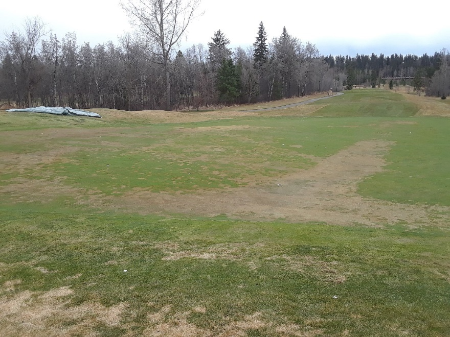 Turfcare picture01.jpg