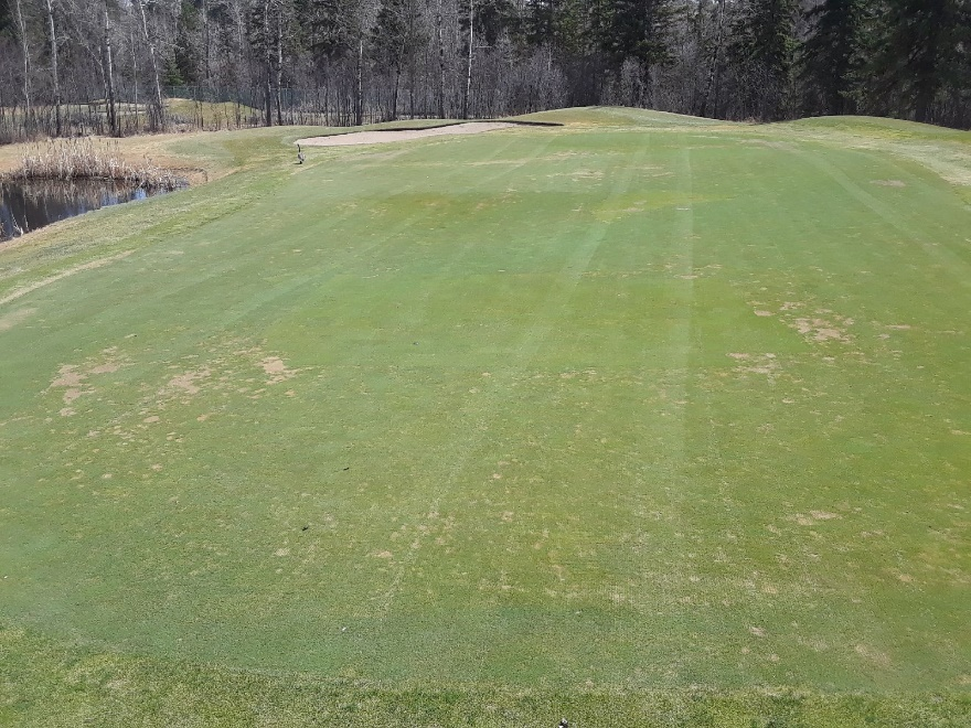 Turfcare picture02.jpg